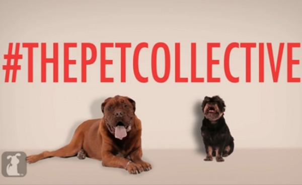 the-pet-collective-600x369